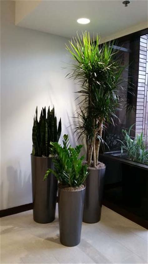 modern houseplants interior plants for building lobby plantopia interior
