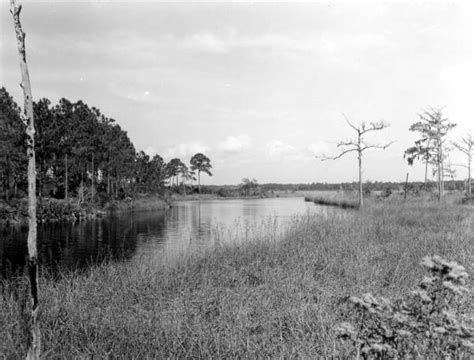 Walton County Florida Court Records Florida Memory View Of Wetlands Walton County Florida