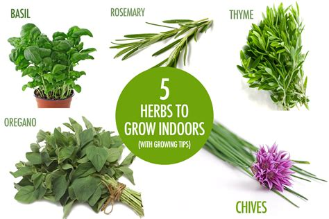 best herbs to grow indoors our top five herbs to grow indoors this winter food