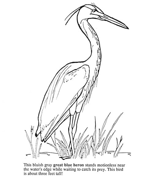 coloring pages of water birds heron colouring pages page 3 pyrography pinterest