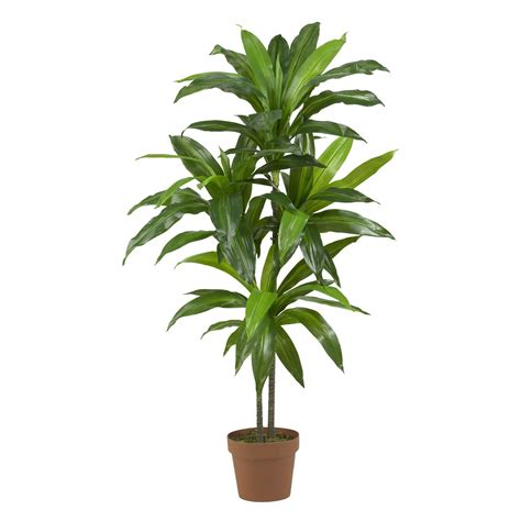 Potted Trees by 48 Inch Dracaena Tree Potted 6585