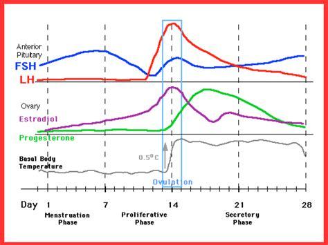 hormone cycle diagram hormones tulsa ok chiropractor alliance