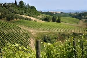 Vineyard for sale in tuscany chianti docg