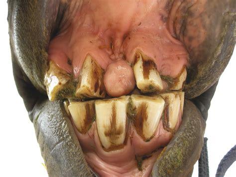 wann sind lymphknoten geschwollen zahnprobleme zahnverlust zungenverletzungen