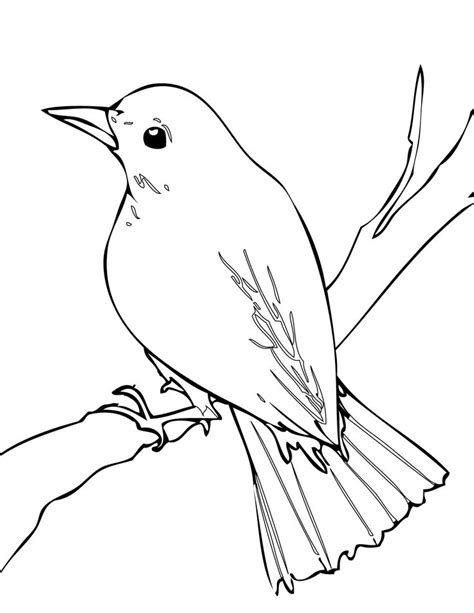 malakiah nightingale s creatures a colouring book by yhon dos santos creepy colouring books i like books nightingale bird drawing blossom bees
