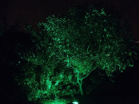Outdoor Lighting Hire Outdoor Lighting Hire Birmingham Garden Lighting Hire For Your Event Store
