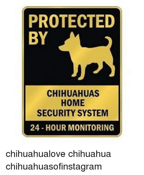 memes and protected by chihuahuas home security