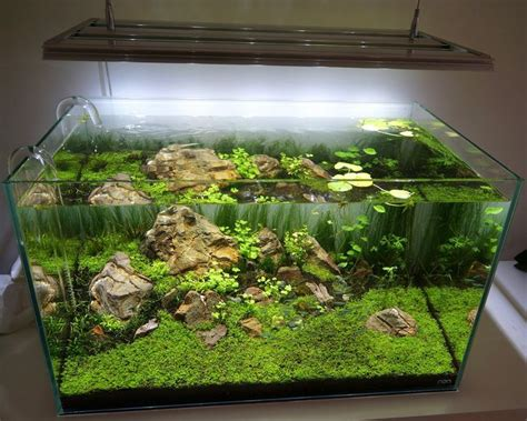 layout aquascape layout par axelwin aquascaping fishtank aquarium