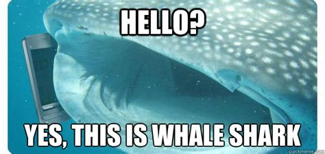 Shark Attack Meme - you are a dentist funny shark meme