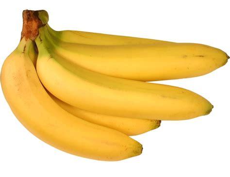 Bibit Pisang Cavendish Di jual bibit pisang cavendish di blitar java landscape