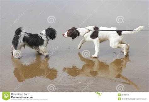 socializing dogs dogs socializing royalty free stock images image 28768449