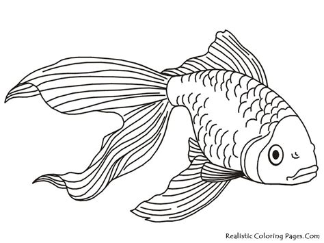 exotic fish coloring pages coloring pages tropical fish coloring pages pictures