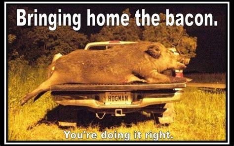 Hog Hunting Memes - image gallery hog hunting meme