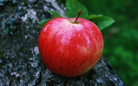 apple wallpaper won t zoom out red apple wallpapers group 83