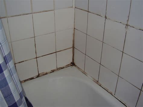 How To Get Mould Bathroom Walls by How To Get Rid Of Mould Hi Glitz Pte Ltd