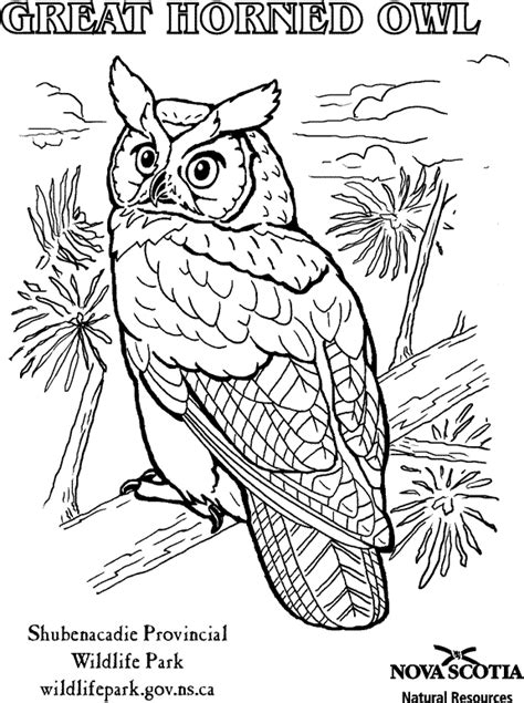 owl coloring pages great horned owl coloring pages kids
