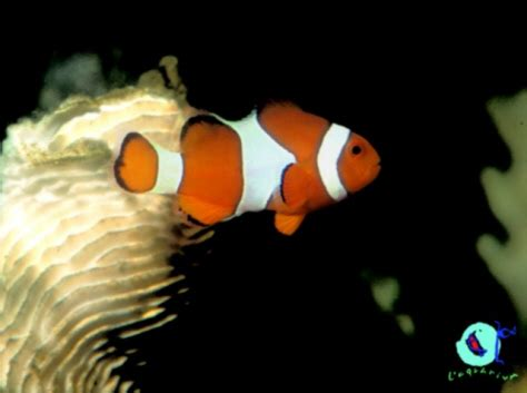 imagenes animales que respiran por branquias peces
