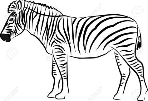 disegni clipart zebra black and white clipart 101 clip