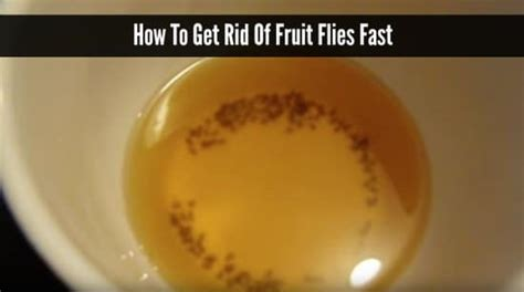 how do you get rid of flies in your backyard how to get rid of fruit flies fast