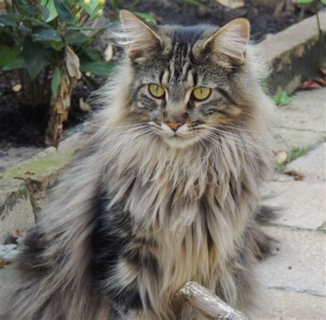 Nyit Vancouver Mba Fees by De Maine Coon