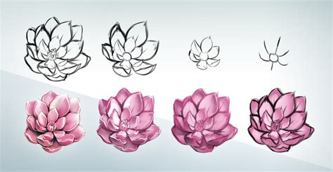 flowers step by step flower drawing step by step www imgkid the image