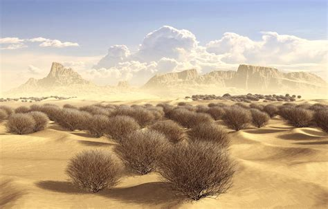 desert tumbleweed color the best of desert 2017
