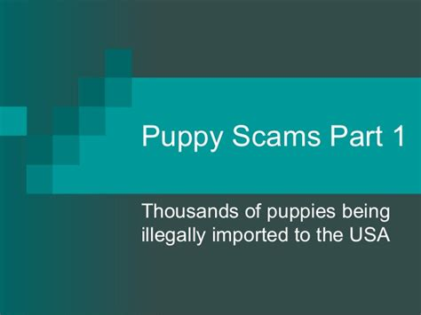 puppy scams puppy scams part 1