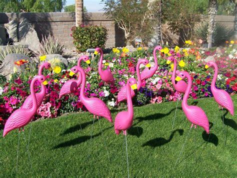 pink flamingos in the front yard yard flamingos plastic flamingos lawn flamingos