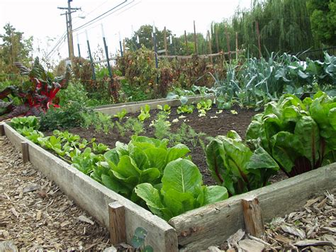 public garden plots put town on path to food independence