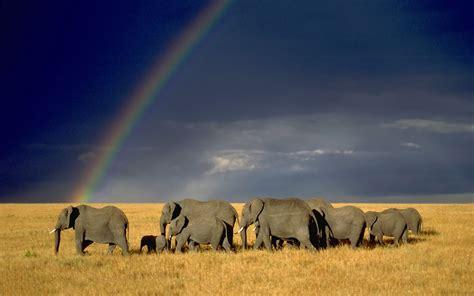 wallpaper hd for desktop elephant herd rainbow wallpaper hd desktop wallpapers