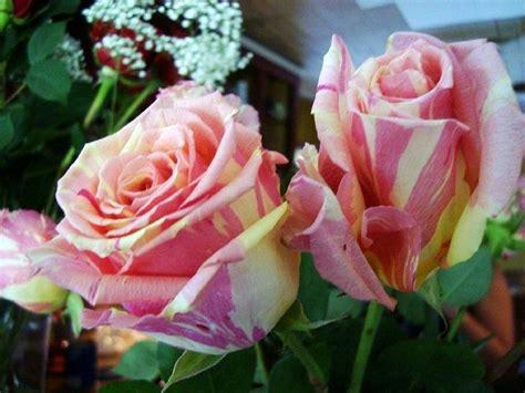 tie dye roses photograph by deborah lacoste
