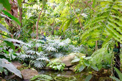 serre jardin des plantes la nouvelle cal 233 donie dans les grandes serres du jardin