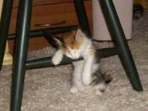 The cutest animals napping in hilarious places 187 cute kitten sleeping