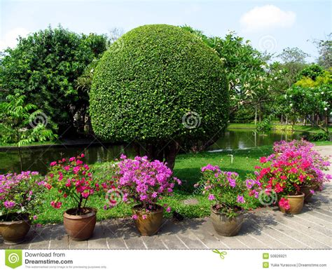 park with beautiful trees and flowers in pots stock photo image 50826921