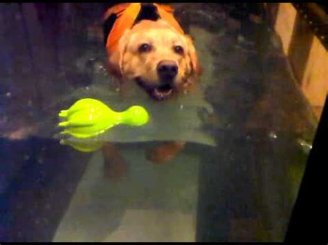 water therapy for dogs aquatic therapy for dogs