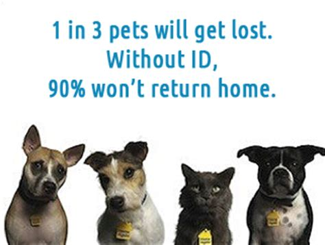 microchip cost microchip options for your pet pethealthcare co zamicrochip options for pets