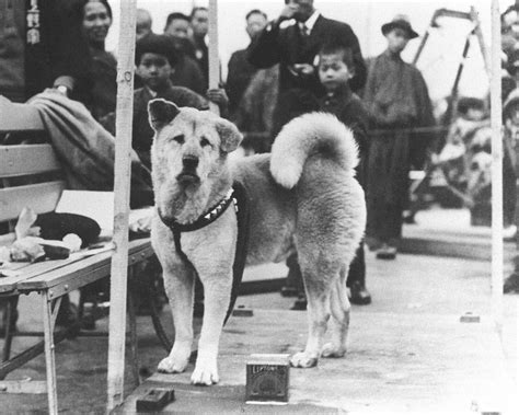 The Story Of Dogs picz hachiko a true loyal friend