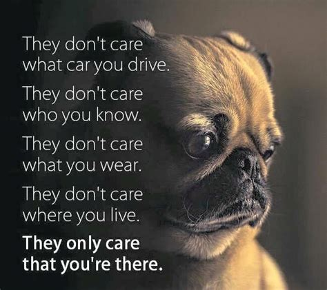 quotes on pugs the 25 best pug quotes ideas on pugs pug puppies and pugs