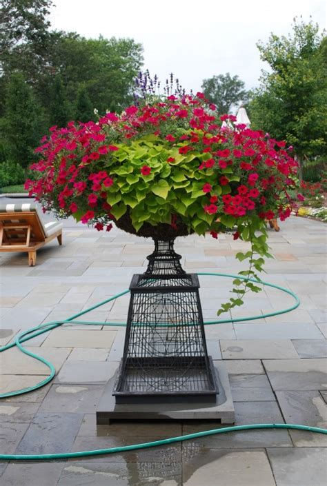 sweet potato container garden sweet potato petunia iron pedestal container garden