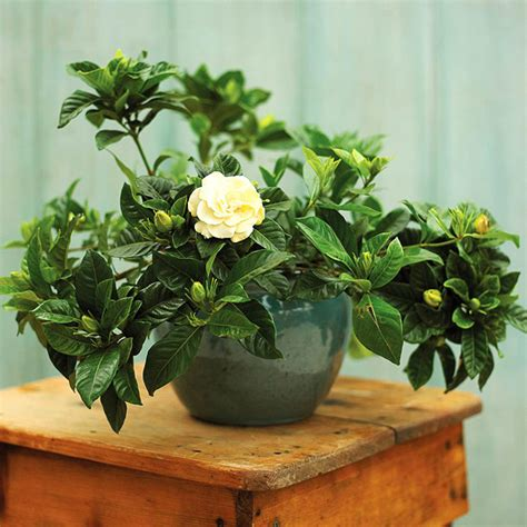 indoor fragrant plants invite nature in with 31 indoor plant ideas