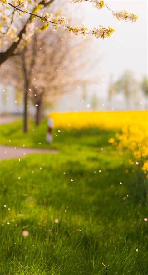 scenery blur flower ki green wallpapersc iphonesplus