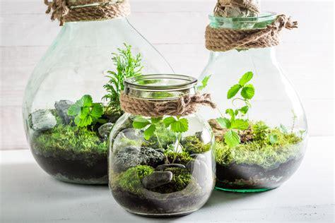 bottle garden ase