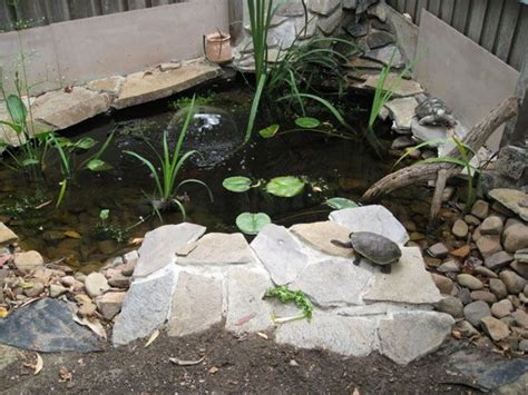 best 25 turtle pond ideas on diy pond koi