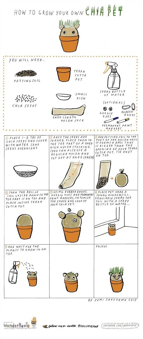 how to kennel your how to make grow your own chia pet 171 the secret yumiverse wonderhowto
