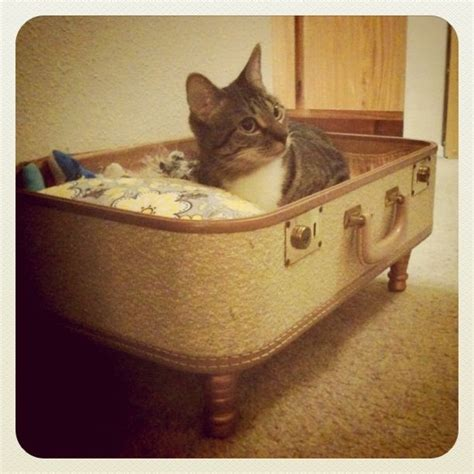 Handmade Cat Beds - 17 best ideas about cat beds on cat