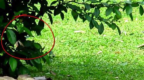 imagenes de duendes reales y feos little creature in the woods part 2 duende visto detras