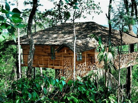 Looking to stay in a Tree house in Kerala ? 15 Best