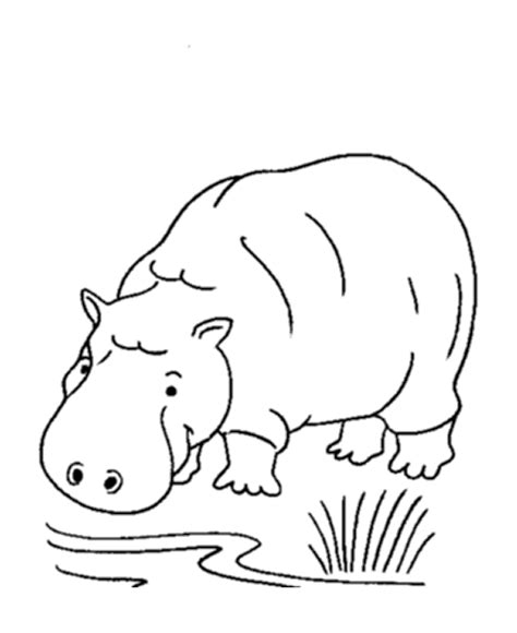 free printable hippopotamus coloring sheet