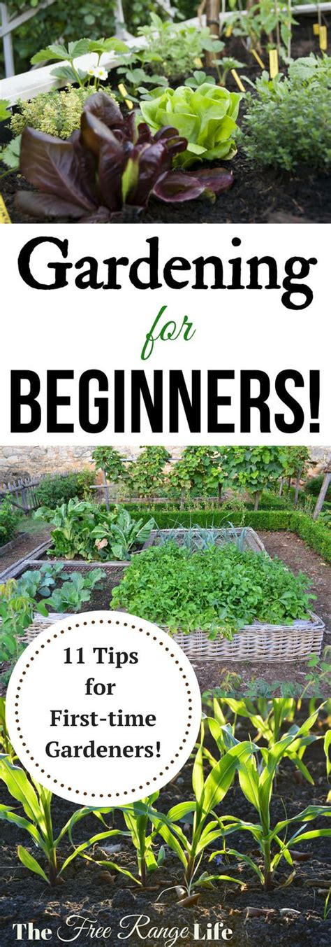seed starting tips for beginner 28 images the