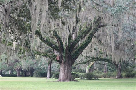 Gardens State Park by Gardens State Park Wedding Tree Www Pixshark